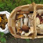 Sienisato kutsuu metsään